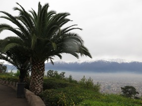 Palm trees and snow, only in Chile