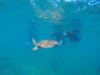 Snorkel spot 2: turtles