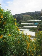 Flower plantations