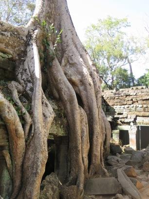 Tree at Ta Prohm