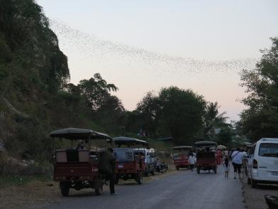 Bat exodus