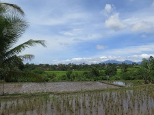 More rice paddies