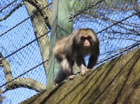 Monkey on the way to the viewpoint