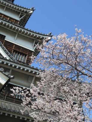 Castle and sakura