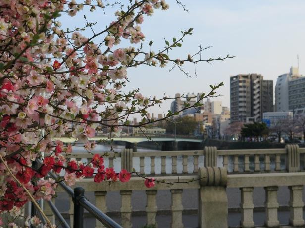 Sakura and bridge