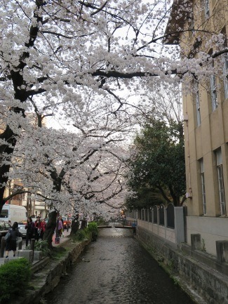 Sakura-lined canal
