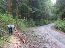 How we got firewood